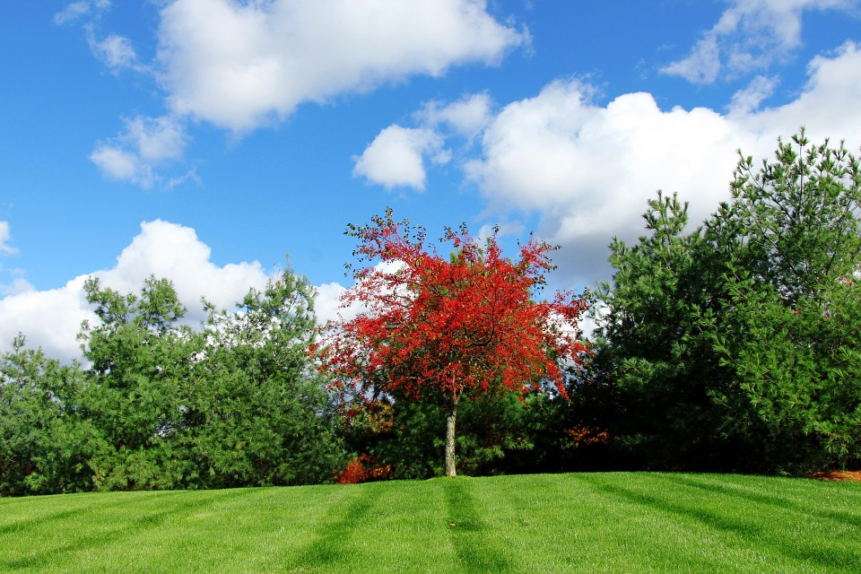 red-tree-220133_960_720